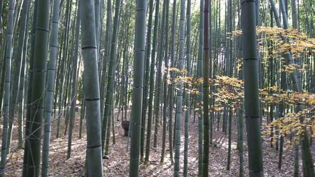 At Kyoto (3)