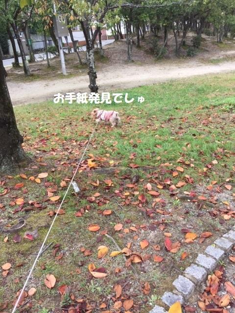 公園散歩k
