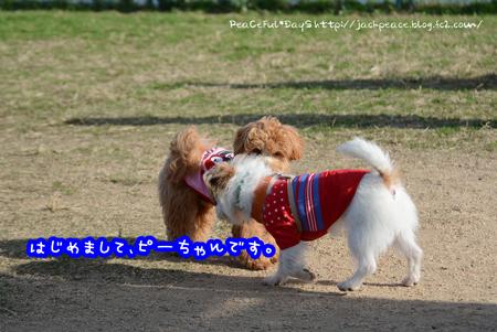 161202_kinokawa5.jpg