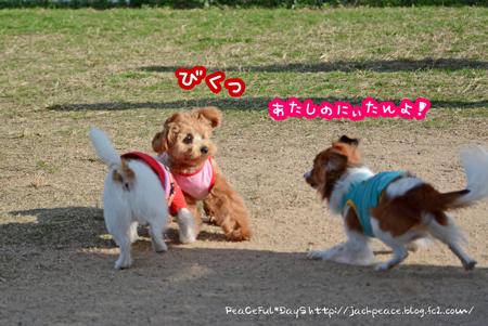 161202_kinokawa7.jpg