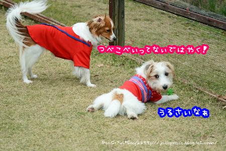 161226_yuasa19.jpg
