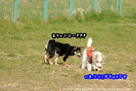 170102_kino1.jpg