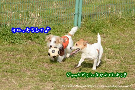 170102_kino3.jpg