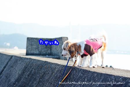 170102_umi10.jpg