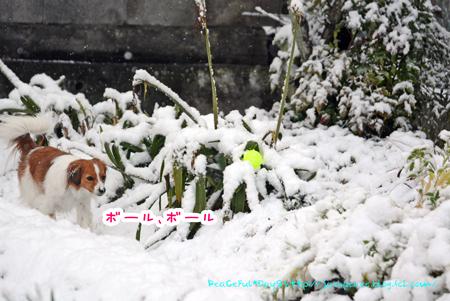170124_yuki43.jpg