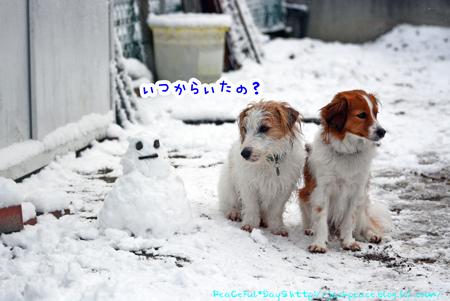 170124_yuki46.jpg