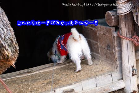 170126_fudoki3.jpg