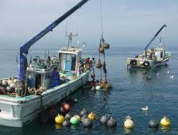 海の仕事。 ホタテ養殖船乗組員
