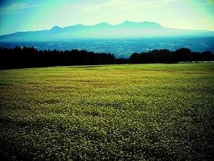 ③行幸田のそば畑