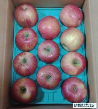 サンデー 葉とらずリンゴ02 201608