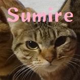 Sumire.jpg
