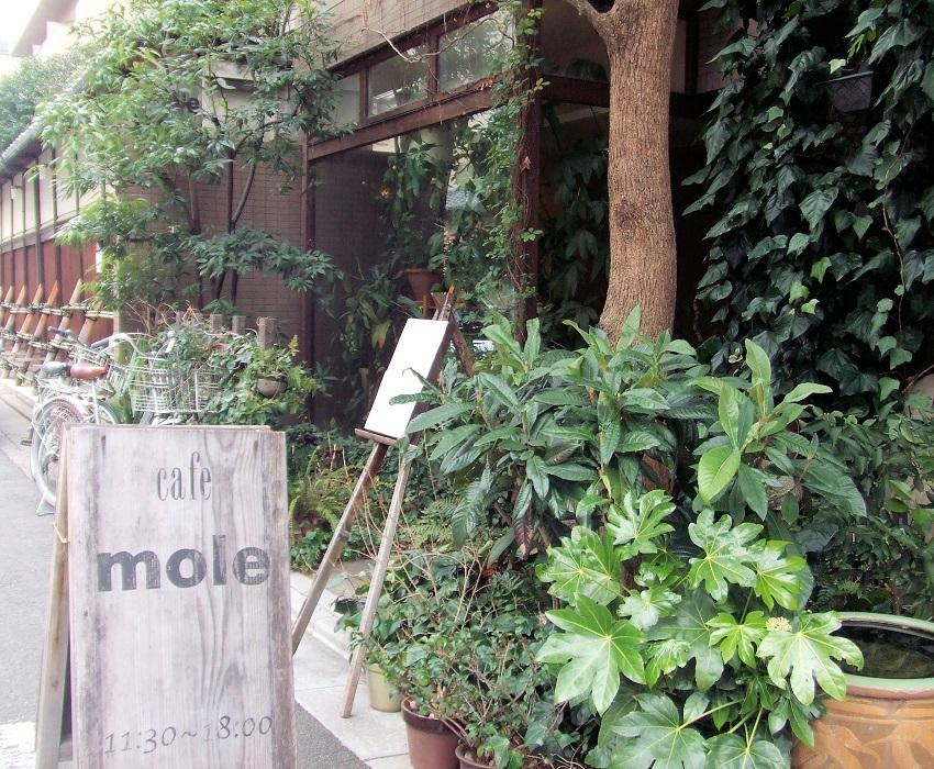 緑に囲まれ静かな喫茶「モール」