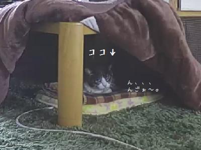 おコタ銀②