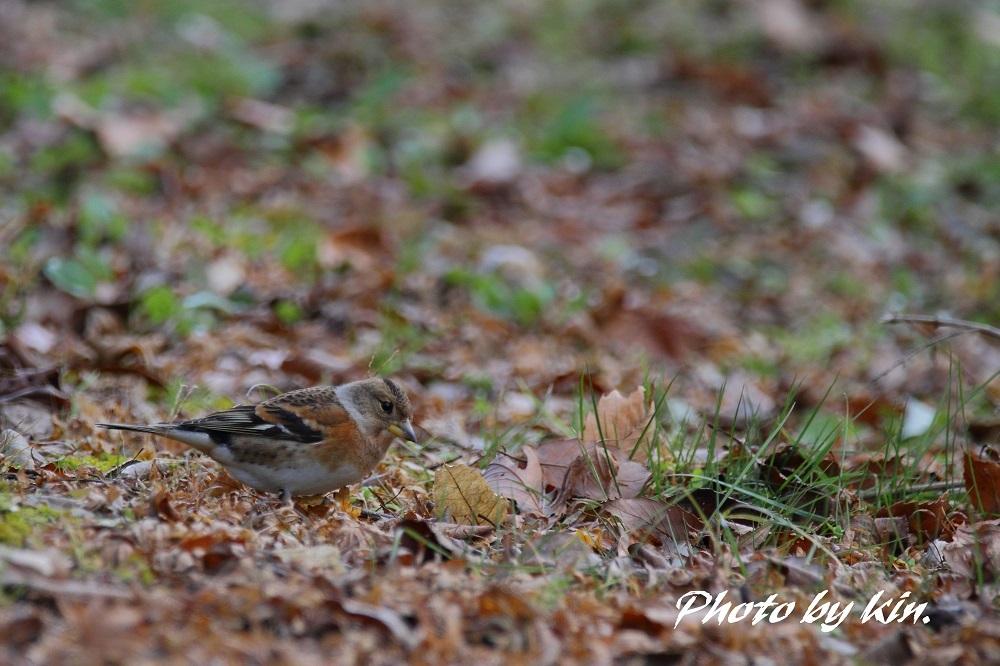 EPISODE 4 ~鳥撮り狂の詩~