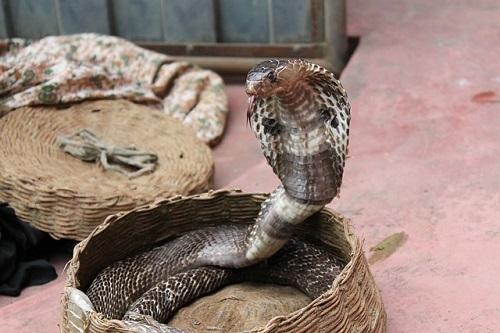 snake-charming-193966_640.jpg