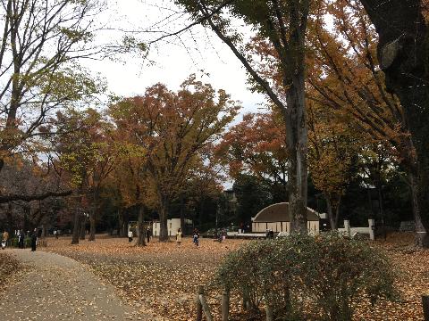 吉祥寺、井の頭公園  紅葉狩り