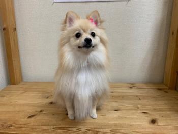 ファニーちゃん30.11.1