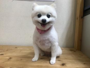 マロンちゃん30.11.19
