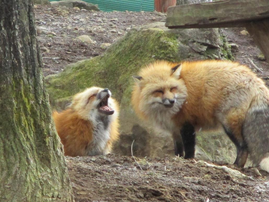 fox087.jpg