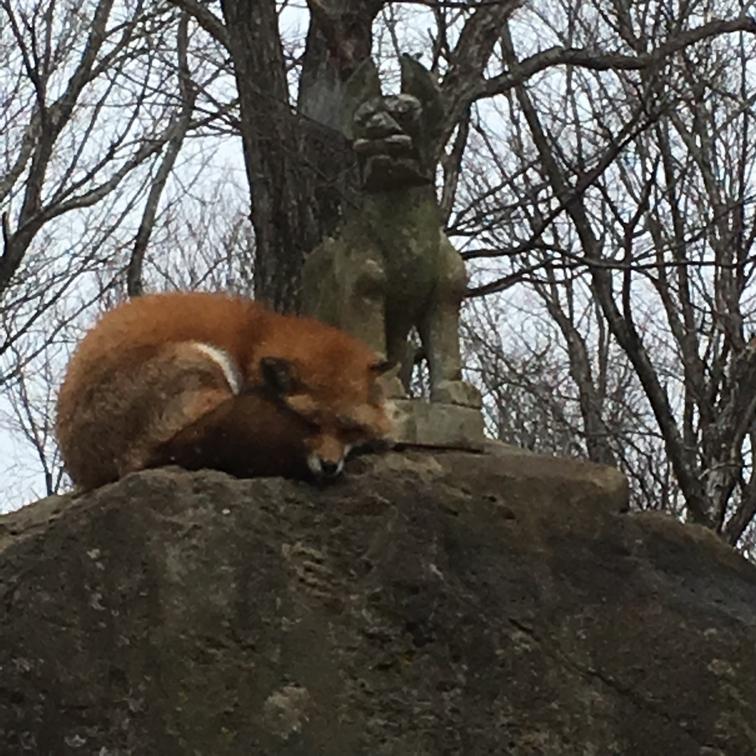 fox092.jpg