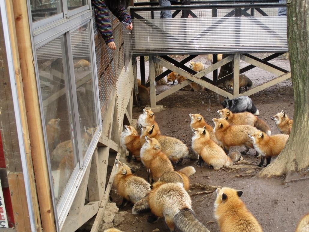 fox169.jpg