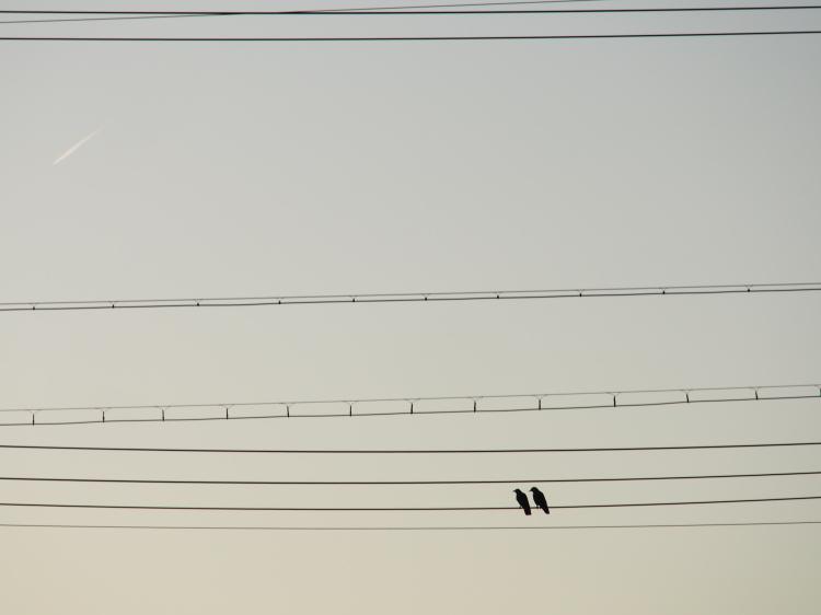 PA210131.jpg