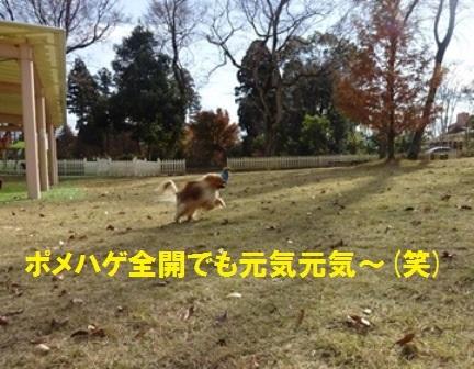 20161202132133dfa.jpg