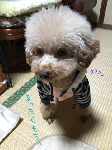 fc2blog_20161209220523bbe.jpg