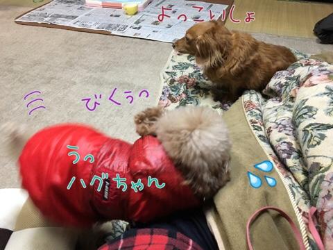 fc2blog_20170123225949c4c.jpg