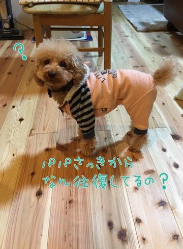 fc2blog_20170209225550950.jpg