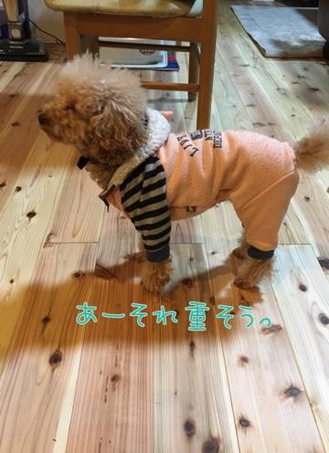 fc2blog_20170209225726c00.jpg
