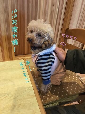 fc2blog_20170209225956743.jpg
