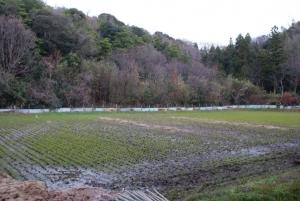 161218きぬむすめの田