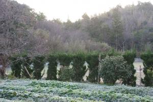 170107霜の朝