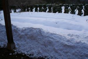 1701248時頃屋根から落ちた雪