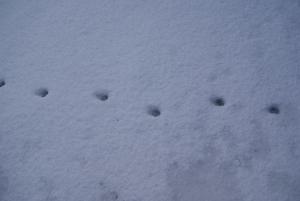 170124動物の足跡1