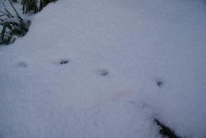 170124動物の足跡2