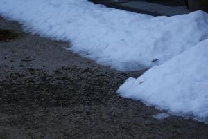 170128屋ねから落ちた雪