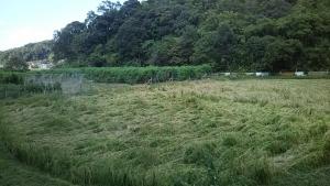 181001上の田から見た下の田