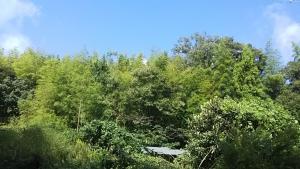 181008山栗の木と屋根