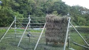 181022黒米刈って干す