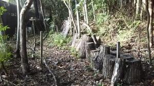 181024椎茸の原木がある