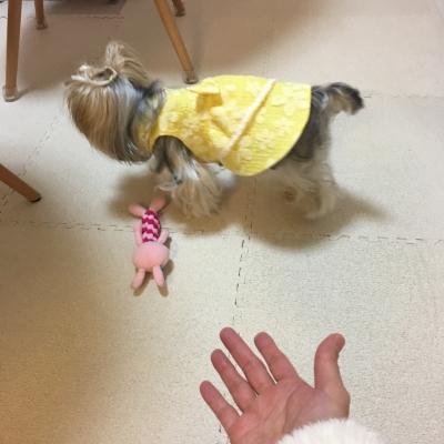 黄色ワンピ4