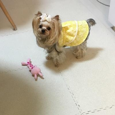 黄色ワンピ9