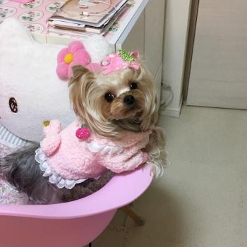 いちごピンク2