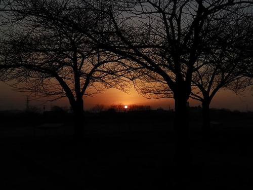 木の間に夕陽