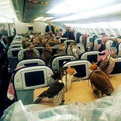 170203 サウジの王子がハヤブサ輸送の為飛行機の80席を借り切った光景 C3fxuIBWAAA5KUN_720x720