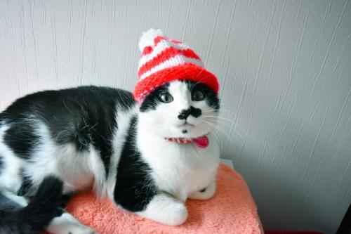 くぅシマシマ帽