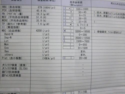 くぅ検査20181209
