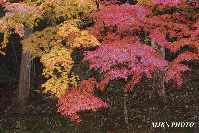 kannamiji6490.jpg